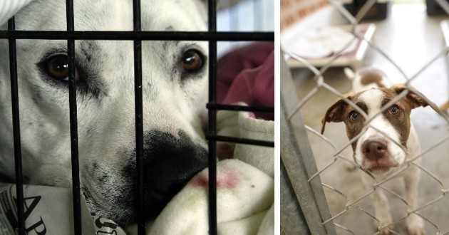 Commerce de viande de chien en Corée du sud
