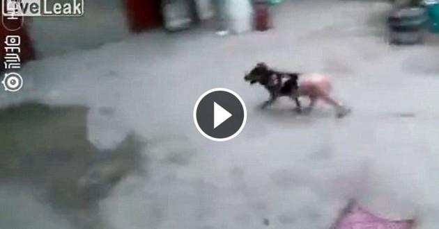 chien cuit vivant chine