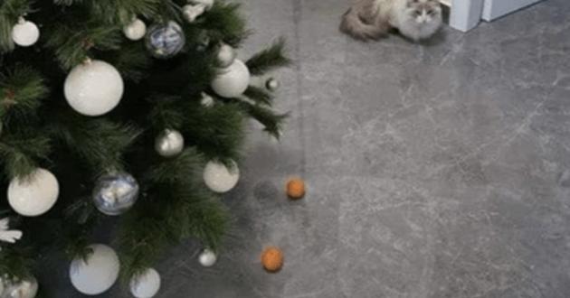 Victor le chat qui a peur des mandarines