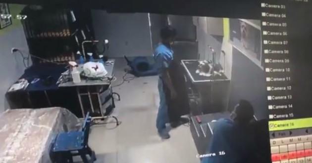 vidéo surveillance toiletteur