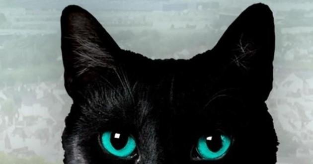 vie secrète des chats
