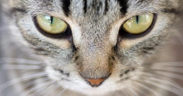 chat sens
