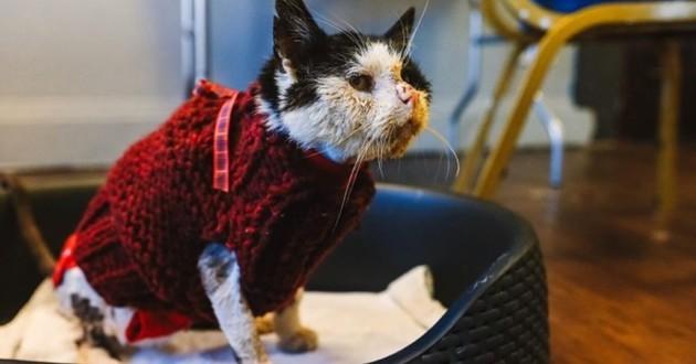chat âgé de 12 ans