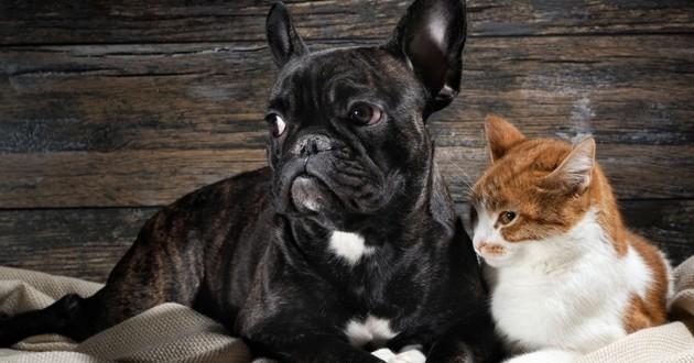 vieux chien et chat
