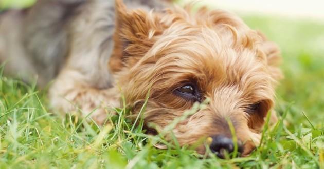 Vendre son chien pour payer ses factures? Un député recadré en Ukraine