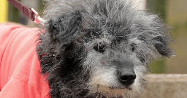 5 conseils pour faciliter le quotidien de son chien âgé