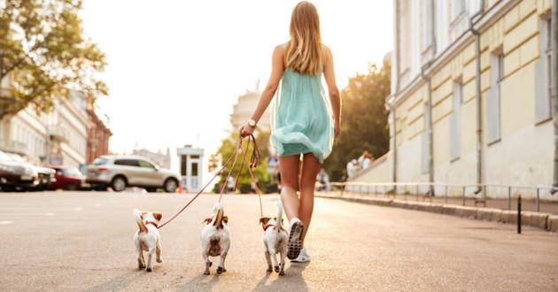 chiens ville