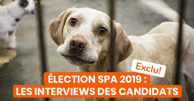 un chien avec un panneau incitant au vote