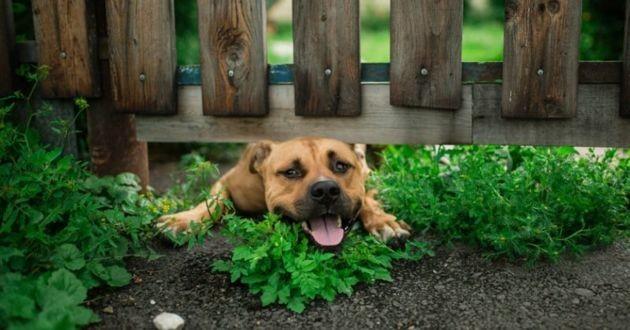 chien du voisin