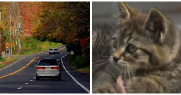 chat sauvetage voiture