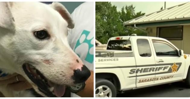 chien et voiture de police