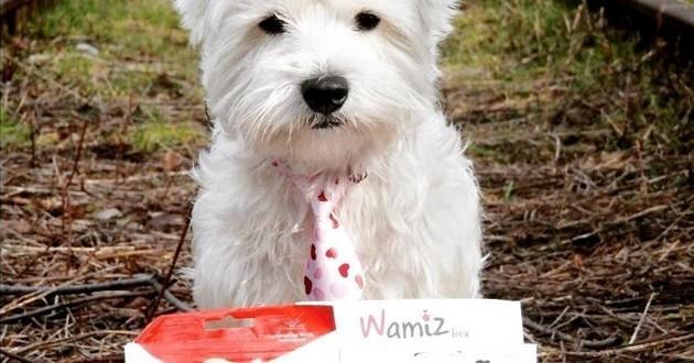 wamiz box chien juin