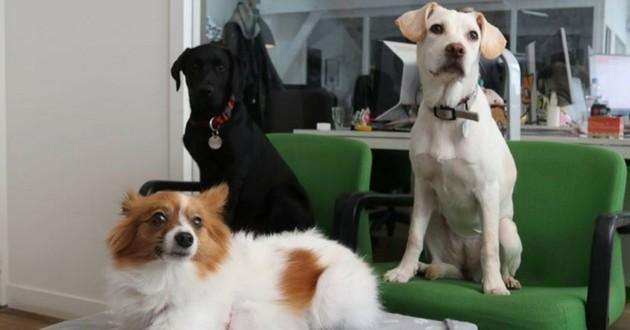Wamiz dog team chiens