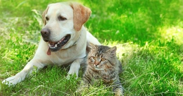 Un chien et un chat allongés dans l'herbe