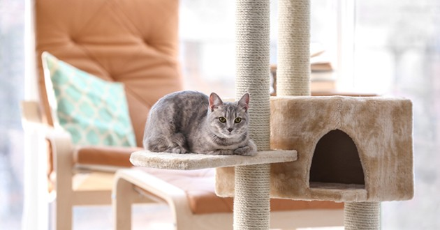 Un chat gris allongé sur un arbre à chat