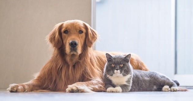 Un chien et un chat allongés