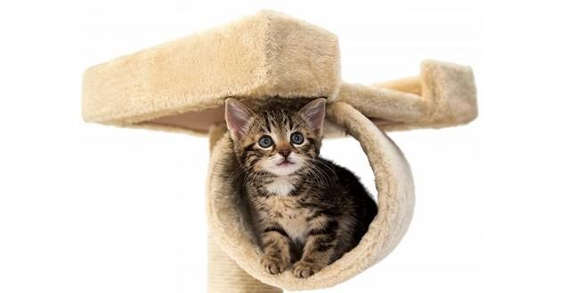 Chat allongé dans panier