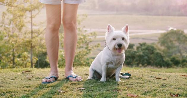 Pour plaire à ses abonnés Instagram, elle fait quelque chose d'horrible à son chien