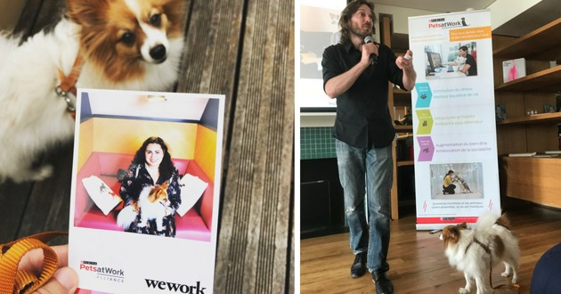 WeWork Pets at Work Purina