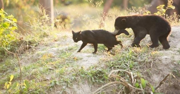 l'amitié chat ours