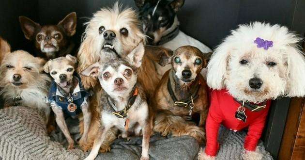chiens âgés