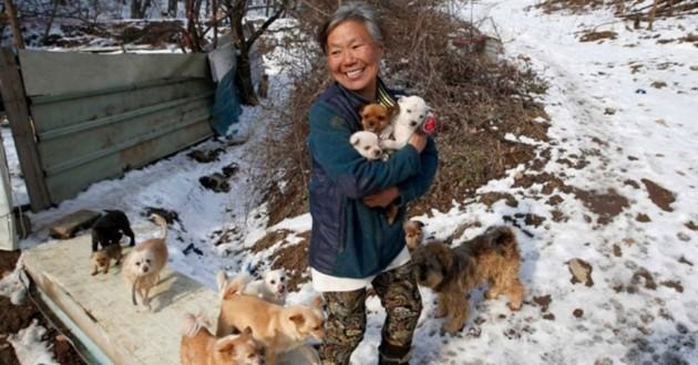 Une Sud-coréenne héroïque sauve la vie de plus de 200 chiens errants