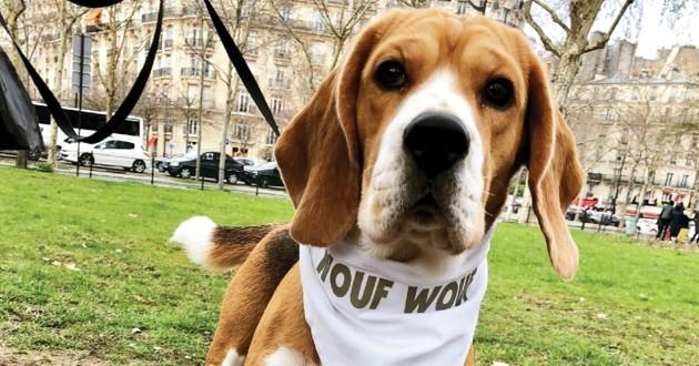 Wouf Wouf promenades de chien