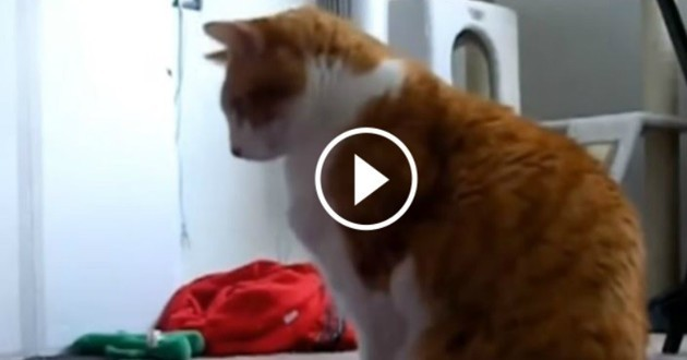 chat roux yoga