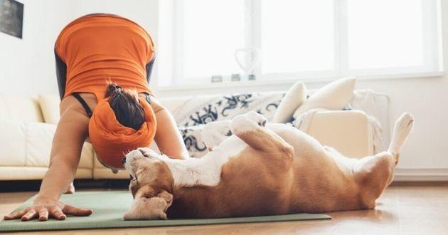 chien femme yoga