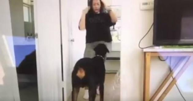 youtube chien vidéo