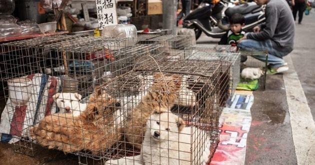 Des chiens entassés dans des cages dans la rue en Chine