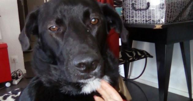 Yuri chienne adoptée