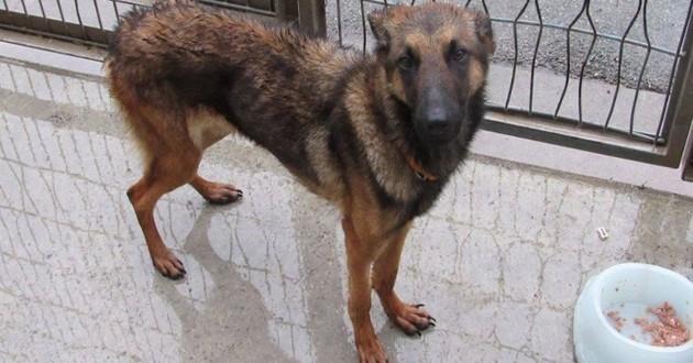Zaya chienne adoptée