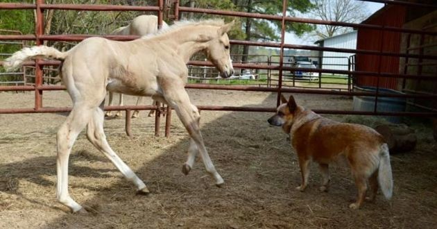un cheval et un chien qui jouent ensemble