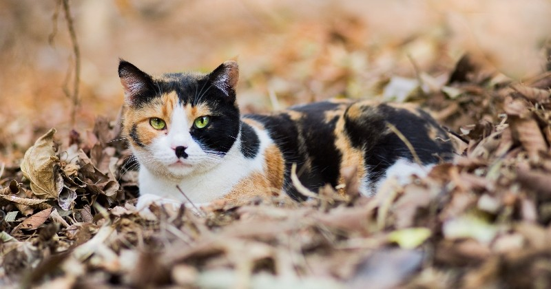 25 photos de chats qui aiment l'automne