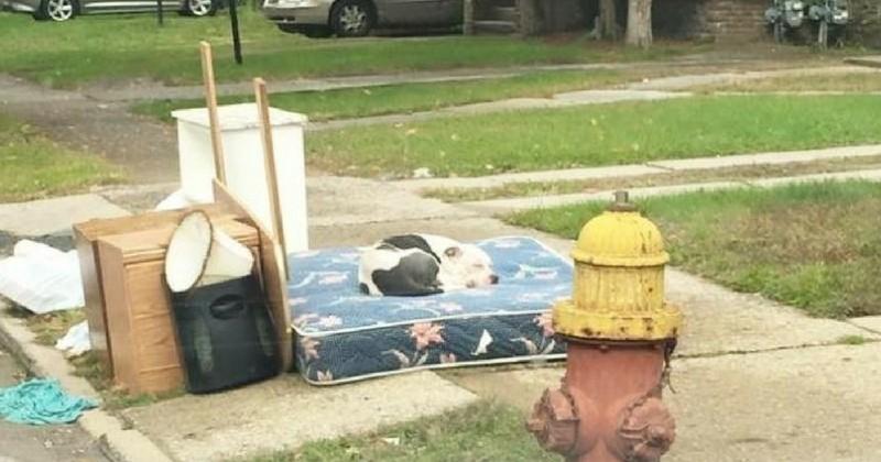 Abandonné avec des meubles, un chien a attendu le retour de ses maîtres pendant 1 mois
