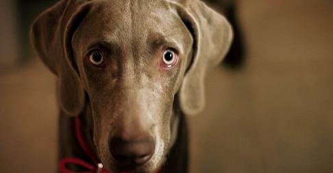 Un chien tué par un policier alors qu'il défendait son propre jardin