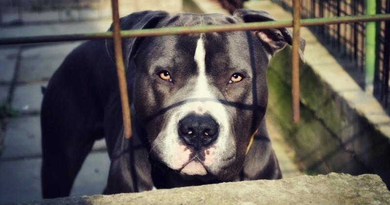 Macabre découverte chez une bénévole d'association animale