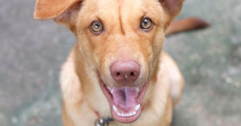 Pour la première fois, un chien assiste au procès de son tortionnaire en Amérique Latine