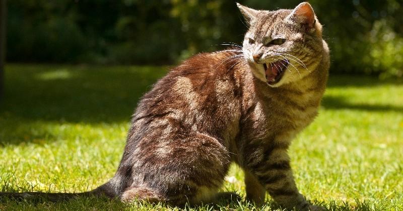SOS : mon animal a blessé quelqu'un, que faire ?