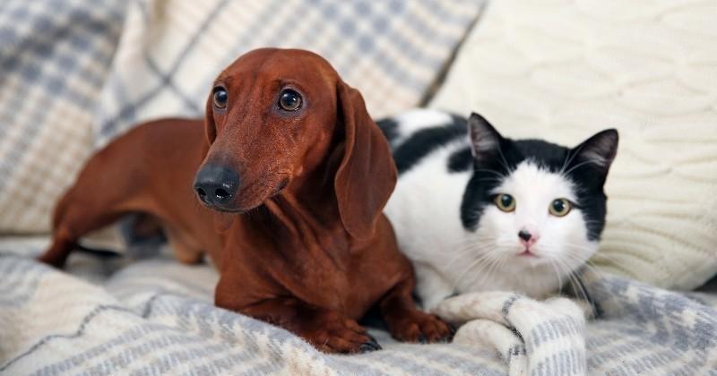 vacances d t comment faire garder son chat ou son chien lorsqu on part sans lui pratique. Black Bedroom Furniture Sets. Home Design Ideas