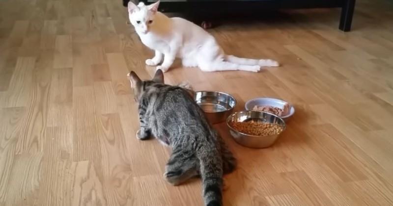 Malgré leur handicap, ces chats profitent de la vie comme personne