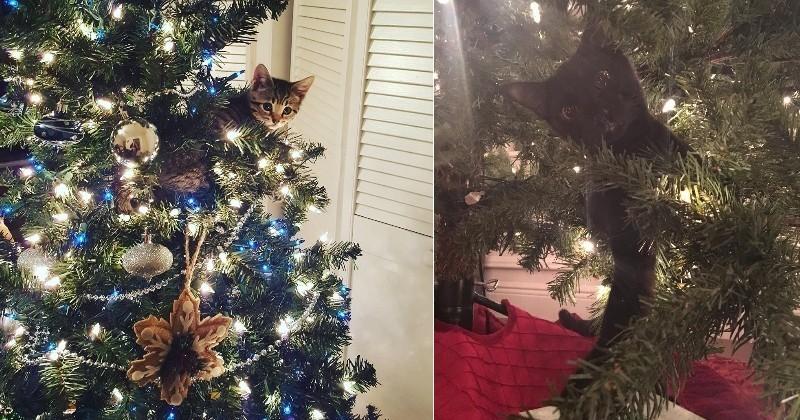 12 chats qui aiment Noël et ses sapins encore plus que vous