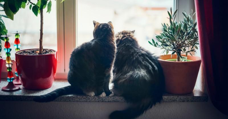 montpellier elle quitte son appartement et abandonne ses deux chats soci t wamiz. Black Bedroom Furniture Sets. Home Design Ideas