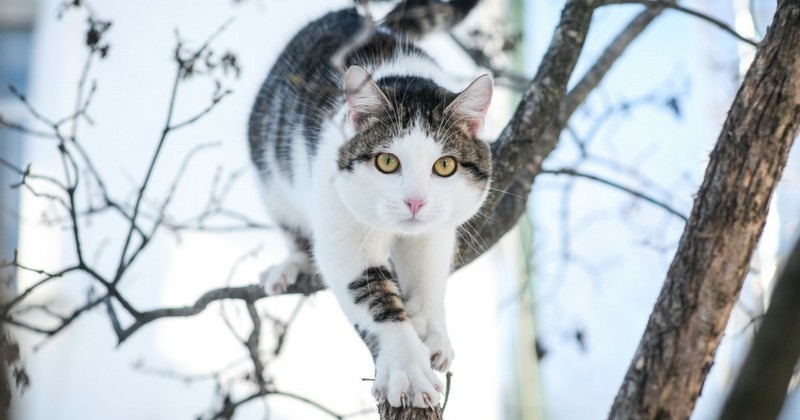 pourquoi mon chat ne sait il pas descendre d un arbre. Black Bedroom Furniture Sets. Home Design Ideas