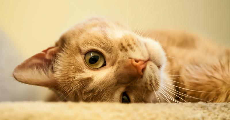 5 astuces pour duquer votre chat eduquer son chat wamiz - Enlever les puces sur un chaton ...