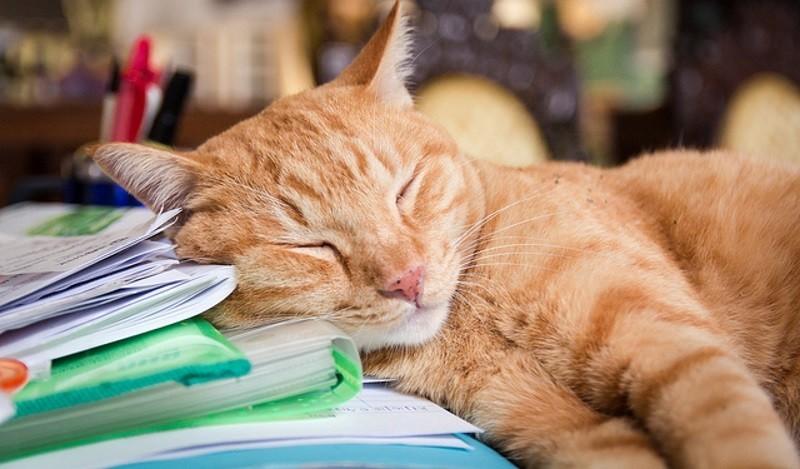"""Résultat de recherche d'images pour """"image chat dort"""""""