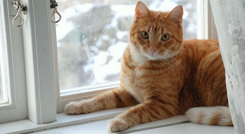 5 conseils pour le bien tre de votre chat pendant l 39 hiver for Fenetre hiver