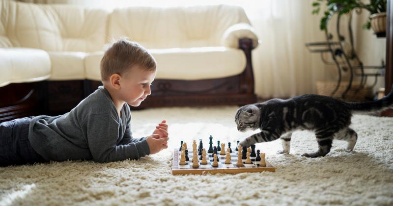 Comment jouer avec son chat ?