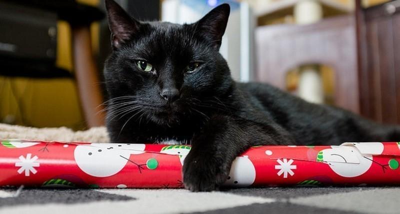 10 id es de cadeaux de no l pour votre chat conso wamiz. Black Bedroom Furniture Sets. Home Design Ideas